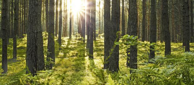 Les Trois Forêts