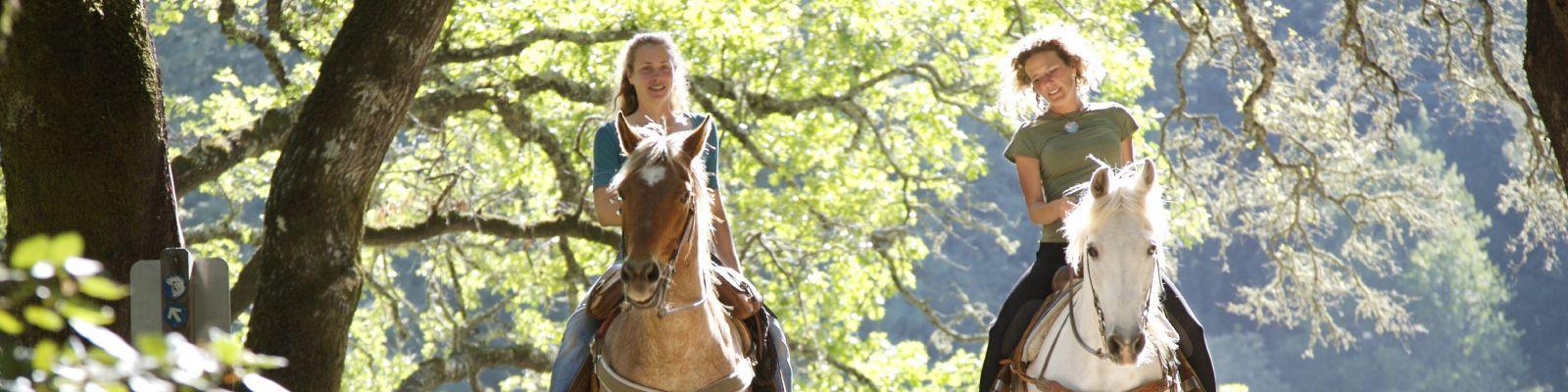 Vakantie Gelderland Paarden