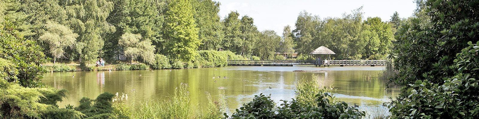 Limburgse Peel