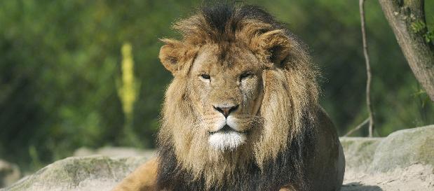 Ferienhaeuser Holland Tierpark Emmen