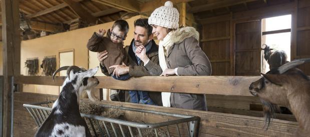 Tierpflege bei Ferien im Elsass