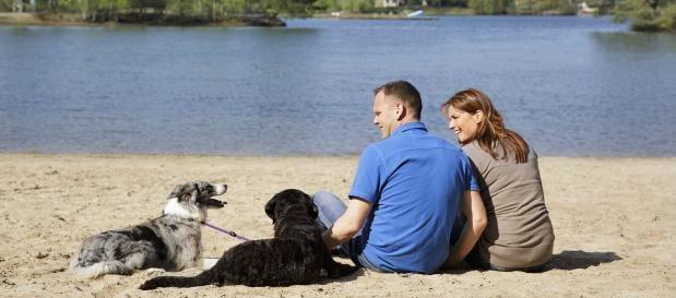 Urlaub mit Hund Gebühren