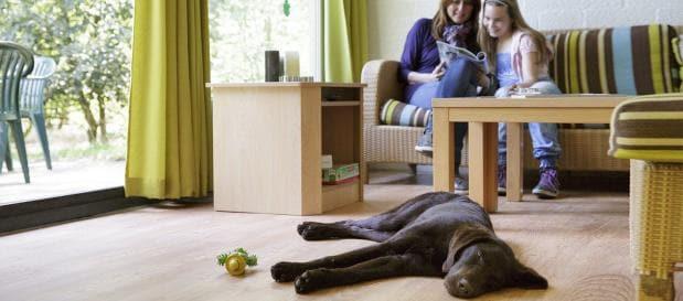 Ferienhaus im Bungalowpark mit Hund