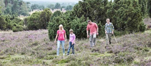 Wandern in der Luenburger Heide
