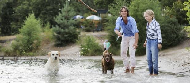 chien eau