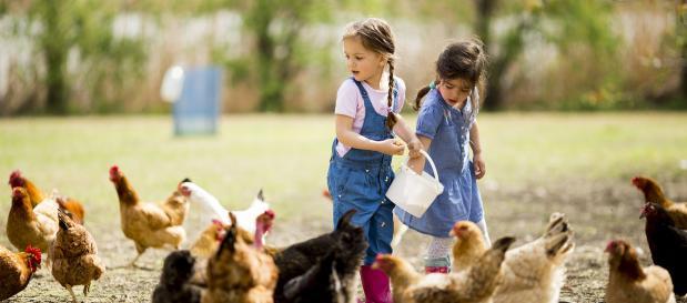 poules enfants