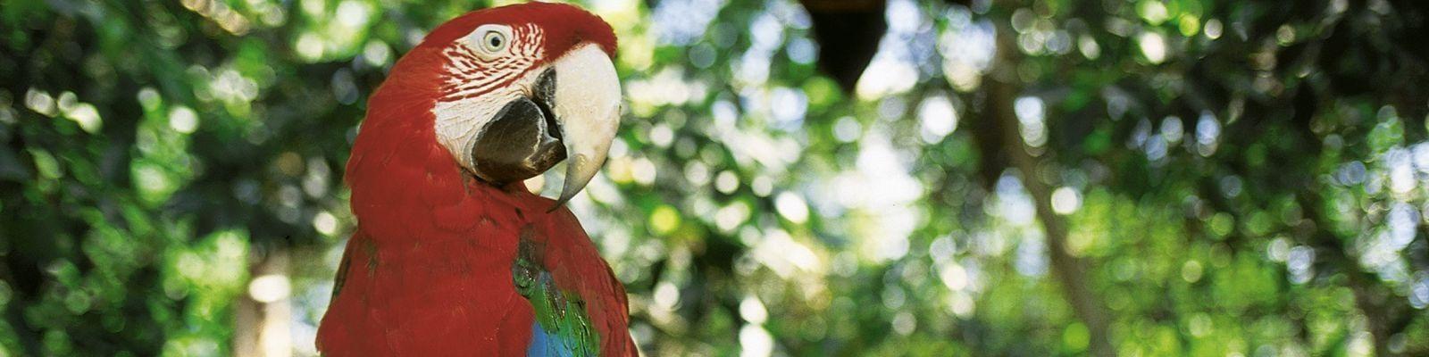 WNF aanbieding papegaai