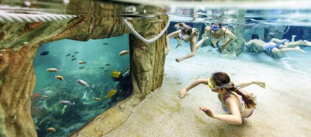 Vakantie Belgie leven in zee bad