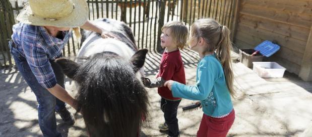 Activiteiten boeken pony verzorgen